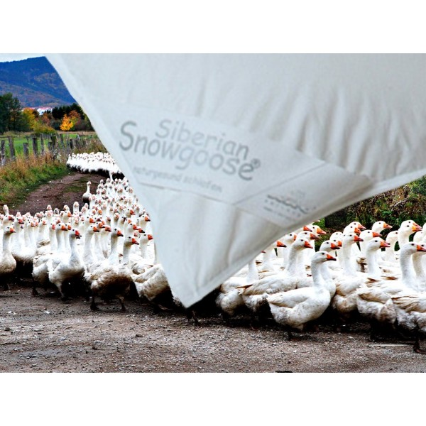 ARO® Snowgoose® All year
