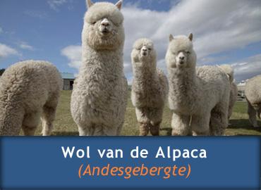 Wol van de alpaca voor een heerlijk dekbed
