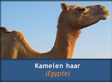 Kamelenharen dekbedden
